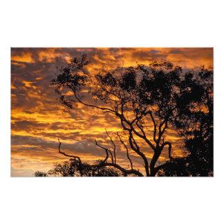Puesta del sol, parque nacional de Uluru-KATA Tjut Impresion Fotografica