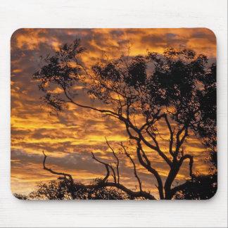 Puesta del sol, parque nacional de Uluru-KATA Tjut Alfombrilla De Ratones