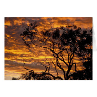 Puesta del sol, parque nacional de Uluru-KATA Tjut Felicitaciones