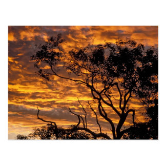 Puesta del sol, parque nacional de Uluru-KATA Tjut Tarjetas Postales