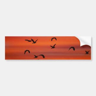 Puesta del sol salvaje del vuelo de los gansos pegatina para auto