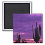 Puesta del sol, Scottsdale, Arizona Imán De Frigorífico