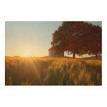 Puesta del sol sobre campo de trigo impresión en madera