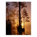 Puesta del sol sobre el pantano de Okefenokee en Postal