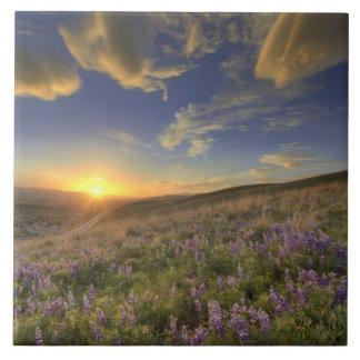 Puesta del sol sobre las montañas del Bitterroot y Azulejo Cuadrado Grande