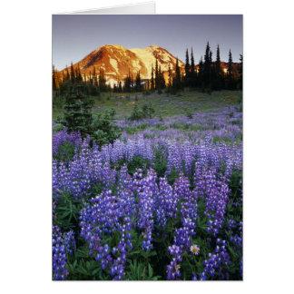 Puesta del sol sobre Mt. Adams y un prado subalpin Tarjeta De Felicitación