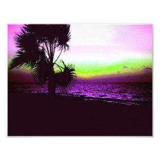 Puesta del sol tropical de la playa y de árboles e fotografia