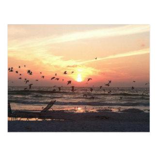 Puesta del sol y gaviotas en la imagen de la playa tarjetas postales