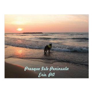 Puestas del sol del amor de los perros postales