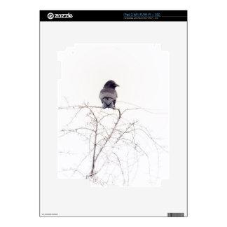 Puesto de observación negro del pájaro del grajo calcomanía para iPad 2