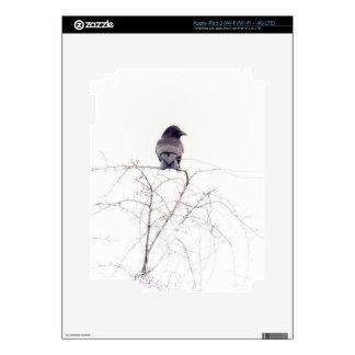 Puesto de observación negro del pájaro del grajo pegatina skin para iPad 3
