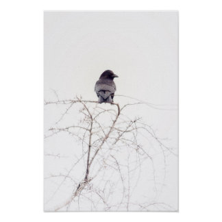 Puesto de observación negro del pájaro del grajo póster