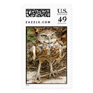 Puesto en peligro madriguera los sellos del búho -