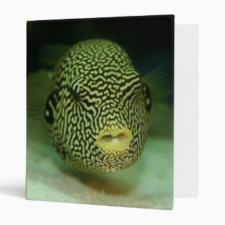 Puff Fish/EEL 3 Ring Binder