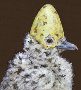 Funny Seagulls Cards | Zazzle