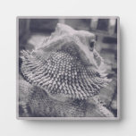 Puff the Bearded Dragon Display Plaques