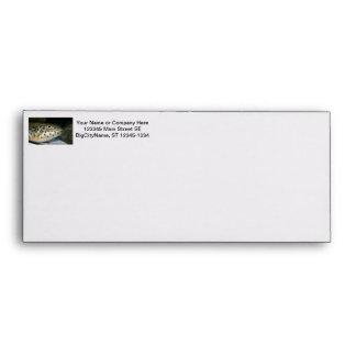 puffer fish facing right yellow eye jpg envelope