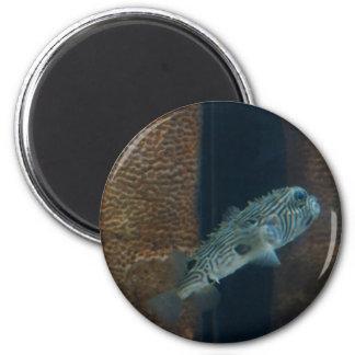 Puffer Fish Mirage 2 Inch Round Magnet