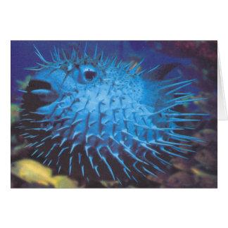 Pufferfish Card