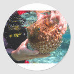 Pufferfish Classic Round Sticker
