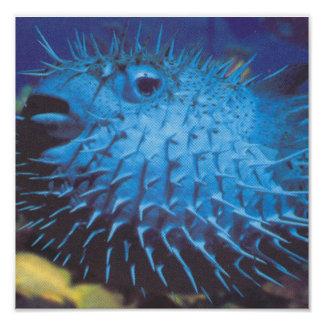 Pufferfish Print