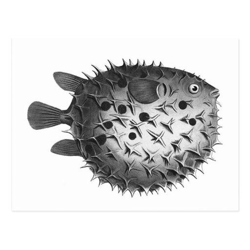 Pufferfish retros del ejemplo del vintage tarjetas postales