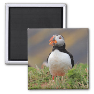 Puffin 2 Inch Square Magnet