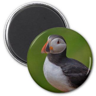 Puffin  B 2 Inch Round Magnet
