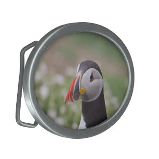 Puffin Buckle Oval Belt Buckle