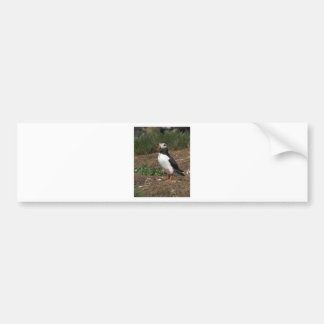Puffin Bumper Sticker