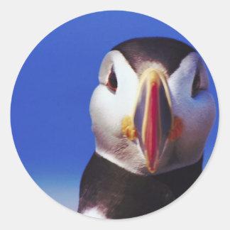 Puffin Close-Up Classic Round Sticker