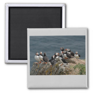 Puffin Convention 2 Inch Square Magnet