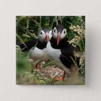 Puffin Couple Button