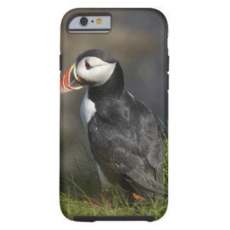 Puffin (Fratercula arctica), Staffa, off Isle of Tough iPhone 6 Case