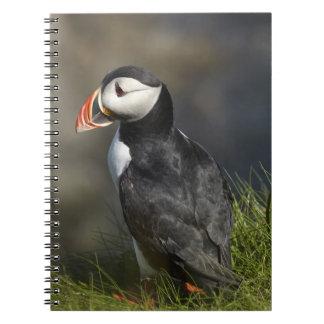 Puffin (Fratercula arctica), Staffa, off Isle of Spiral Notebook