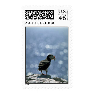 Puffin Fratercula artica Postage Stamps
