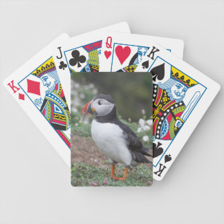 Puffin from Skomer Island Bicycle Playing Cards