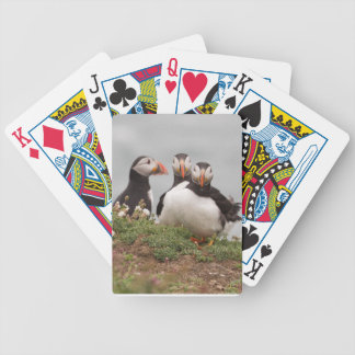 Puffin Group Bicycle Playing Cards