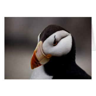 Puffin Horned 9020 Stationery Note Card