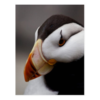 Puffin Horned 9028 Postcard
