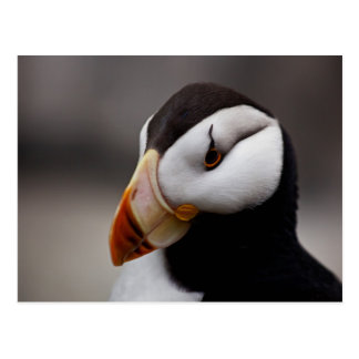 Puffin Horned 9028 Postcards