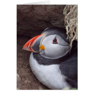 Puffin in a Burrow Card