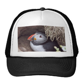 Puffin in a Burrow Trucker Hats