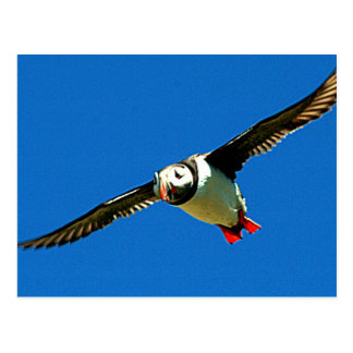 Puffin in flight postcard