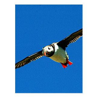 Puffin in flight postcard
