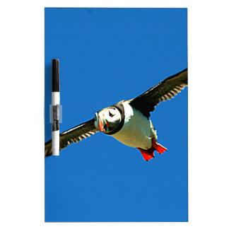 Puffin in flight skellig Islands Ireland Dry Erase Boards