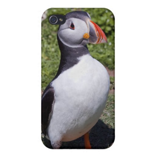 Puffin iPhone 4 Speck Case Case For iPhone 4