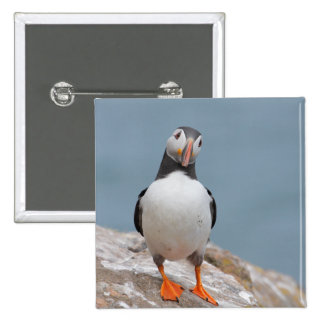 Puffin Pose Pinback Button