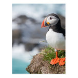 Puffin Post Cards