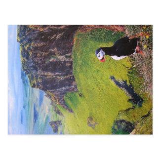 Puffin postcard